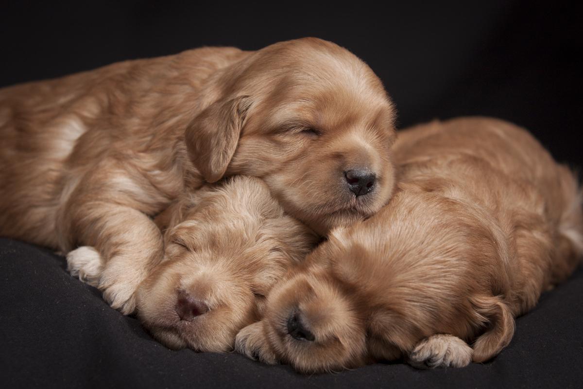One pile of precious