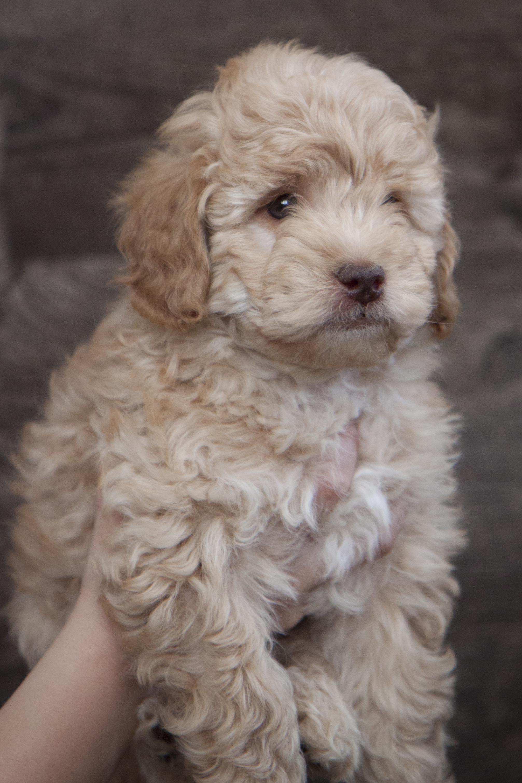 Kipper at 7 weeks