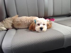 Winnie after a Hair Cut